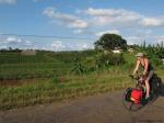 Rolling past the tobacco fields as we near Vinales.